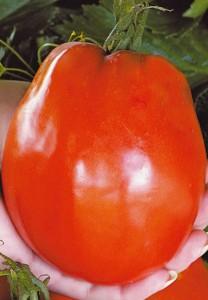 помидор для теплицы Де Барао Гигант