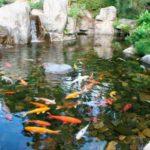 способы очищения воды в водоеме