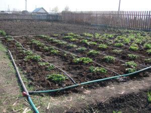 Капельный полив огорода