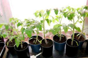 Семена, посеянные в январе, месяц спустя