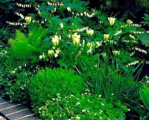 растения для композиции в группе