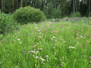 газон для природного сада