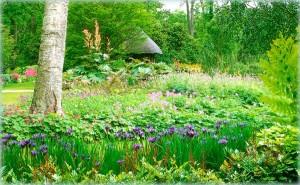 природный сад с лесными цветами