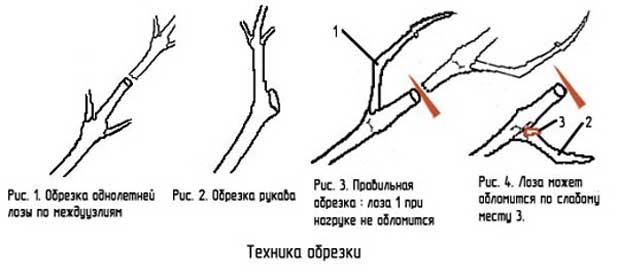 техники обрезки винограда
