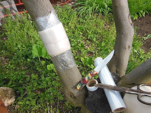 Обработка сада осенью от вредителей и болезней: препараты и порядок работ
