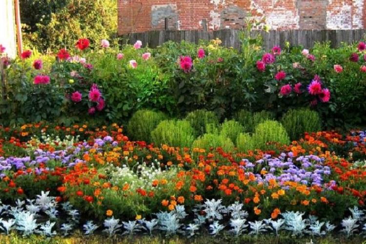 Схема клумбы для многолетних цветов
