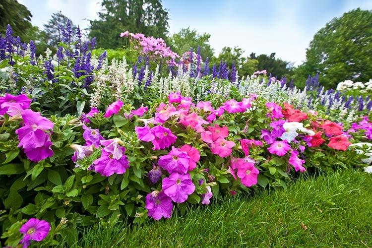 Многолетние цветы для вашей клумбы