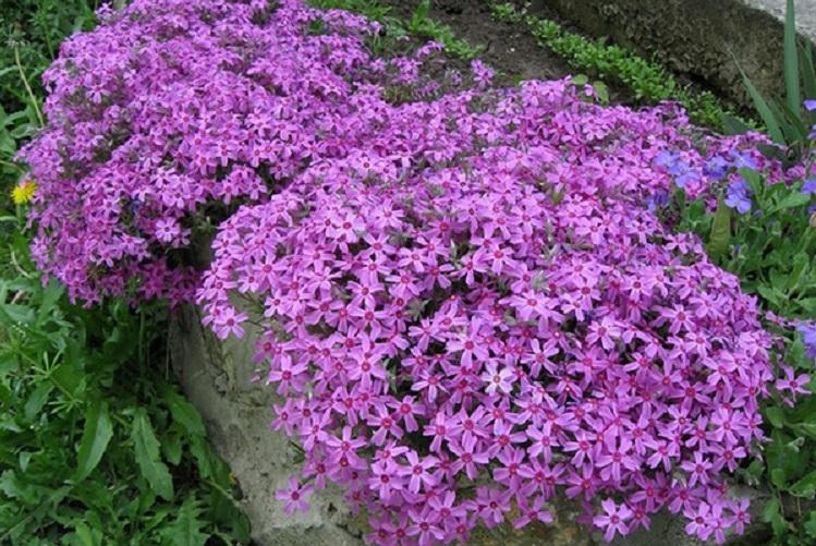 Осенние многолетние цветы