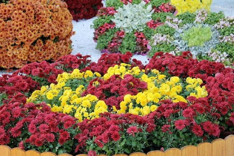 Преимущества многолетних цветов